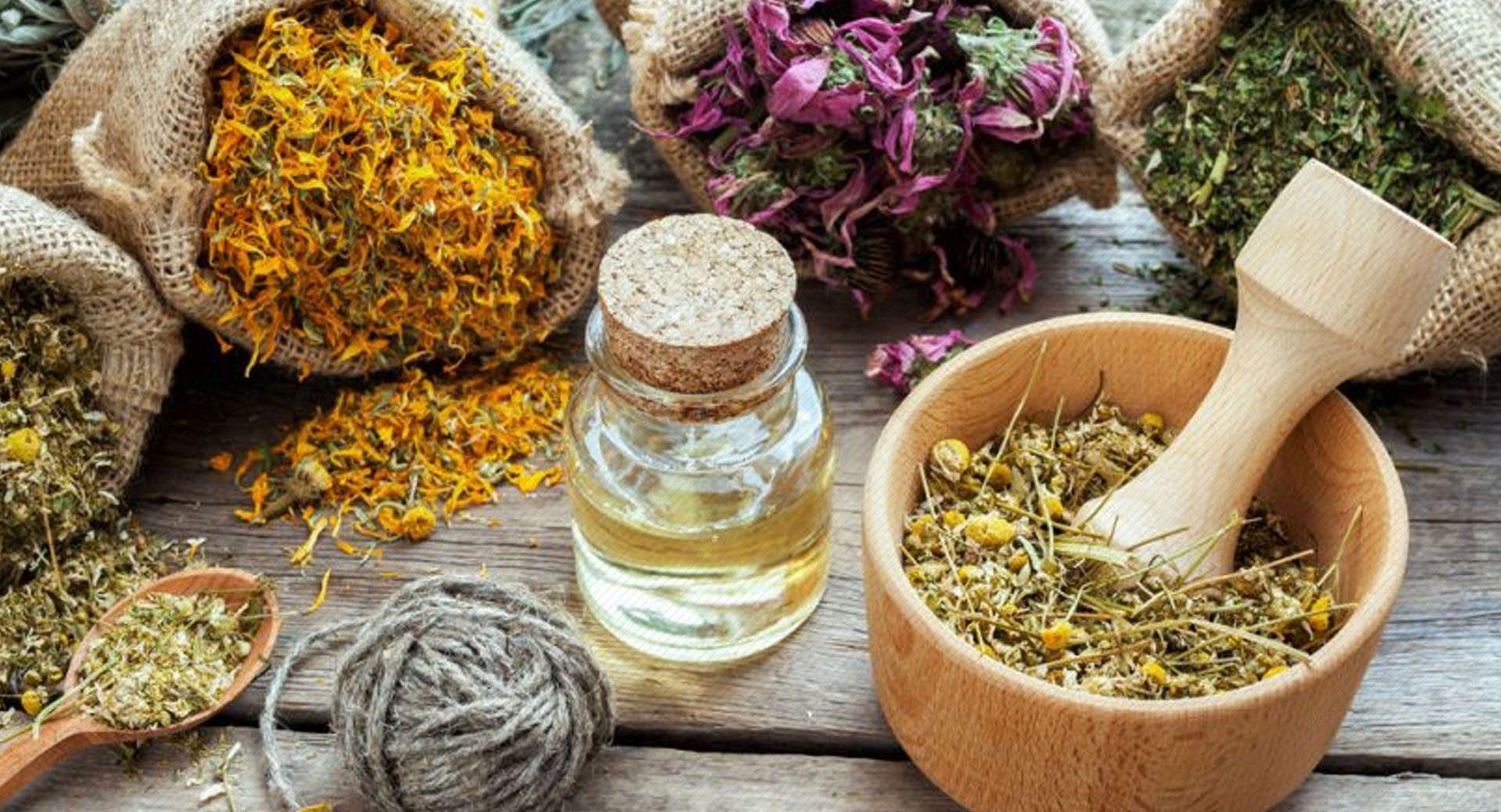 Medicamentos Fitoterápicos e Plantas  Medicinais